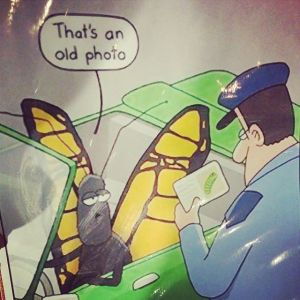 ButterflyID