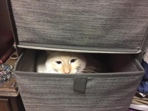 PinkyCatDrawer